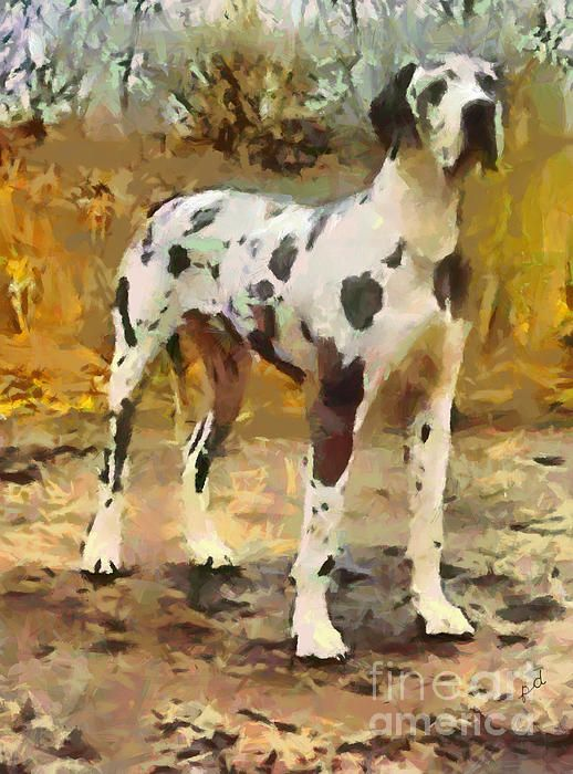 Harlequin Great Dane Zeus By Doggy Lips Harlequin Great Danes