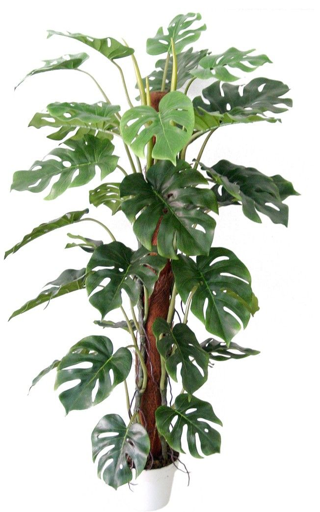 artificial tropical plants and trees be sure to visit