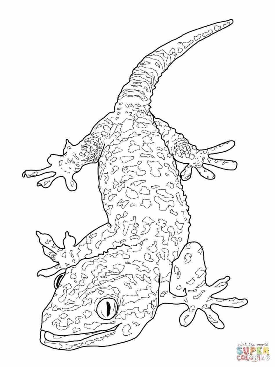 Pin by Draw Info on drawing your ideas Pinterest Lizards