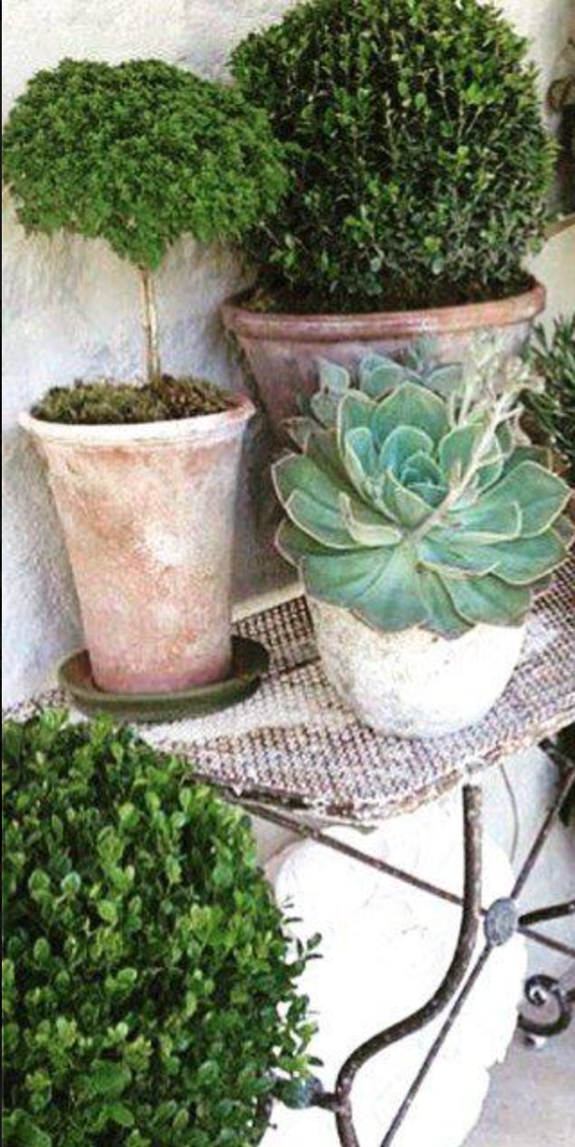Pots Planters Clay Terra Cotta Small Pots W Topiaries