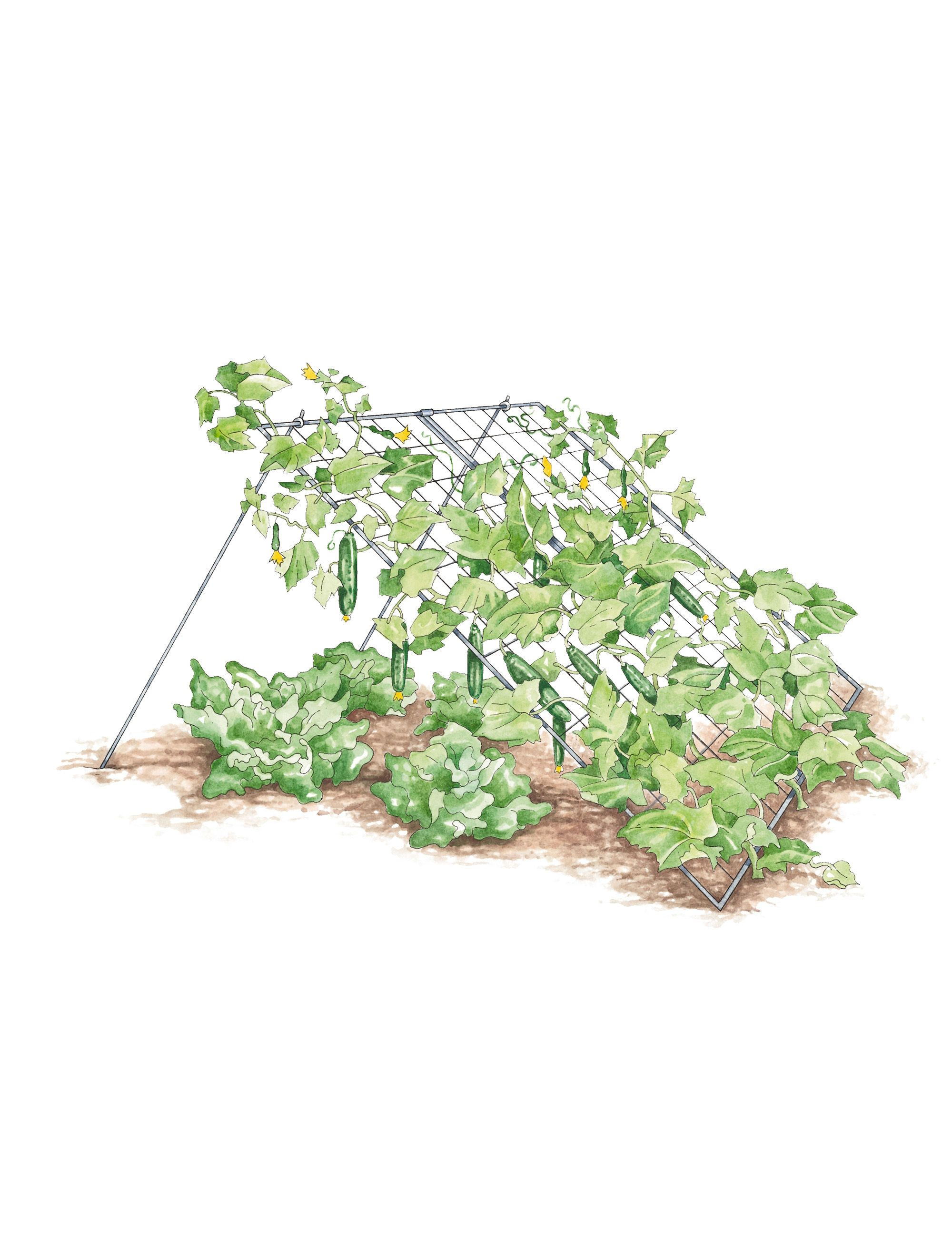 Cucumber Trellis - Large | Powder Coated Steel | Gardener's Supply [perhaps something I can make myself?]