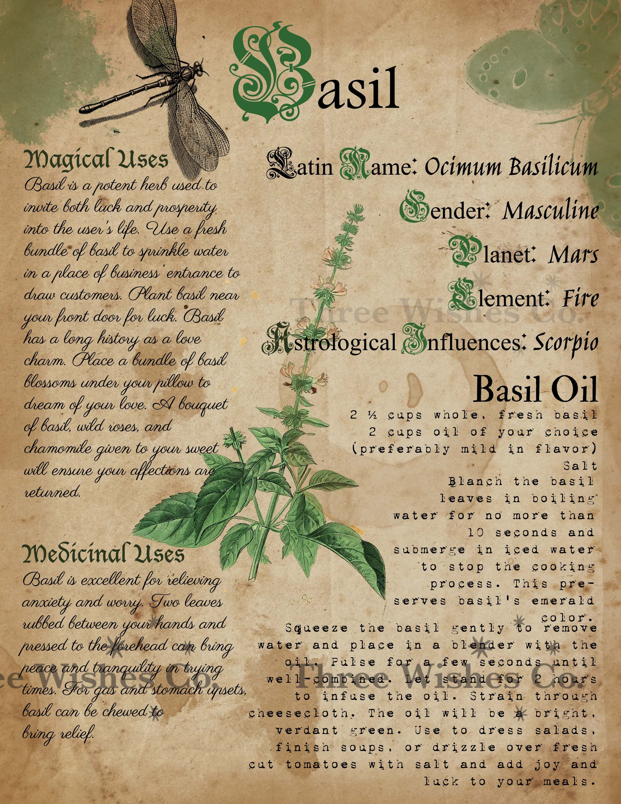 Basil. Witch Grimoire. Book of Shadows. Book of Sp