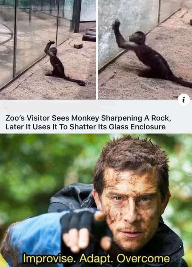Apes, together, strong. | Funny, Funny animals, Funny pictures