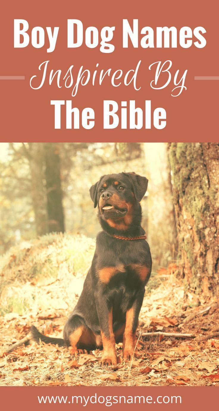 Medium Of Strong Dog Names