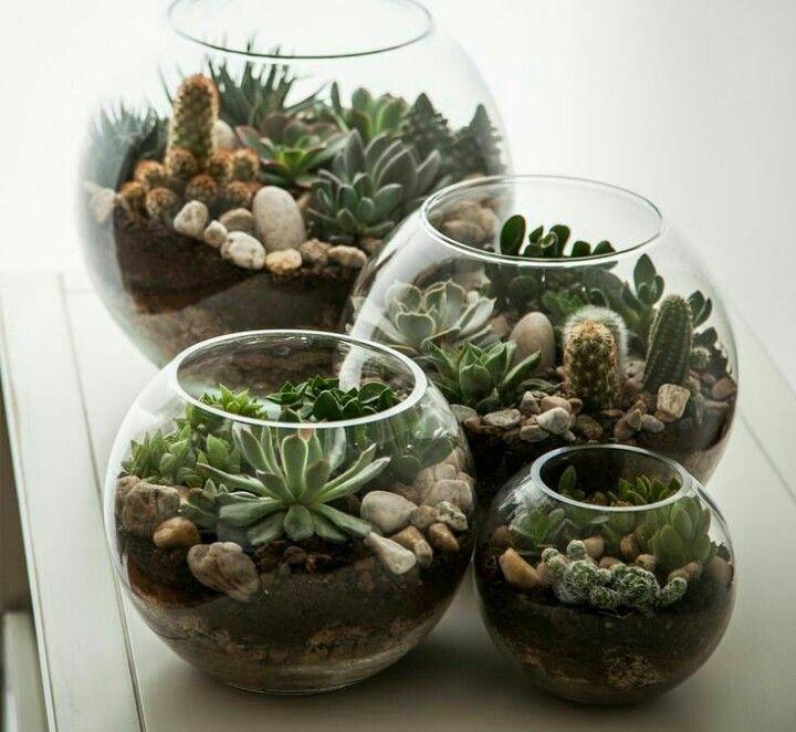 Pin de michelle rehmert en succulents and air plants - Decoracion para terrarios ...