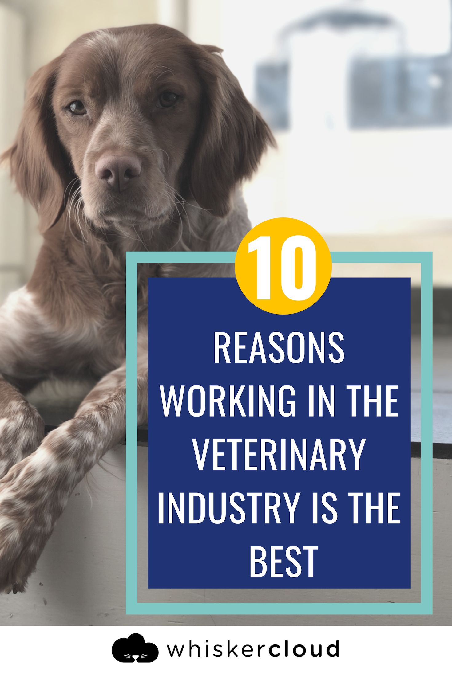 Ten Reasons Working In The Veterinary Industry Is The Best Veterinary Veterinary World Smiling Animals