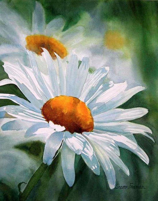 цветы ромашки картинки акварель классического
