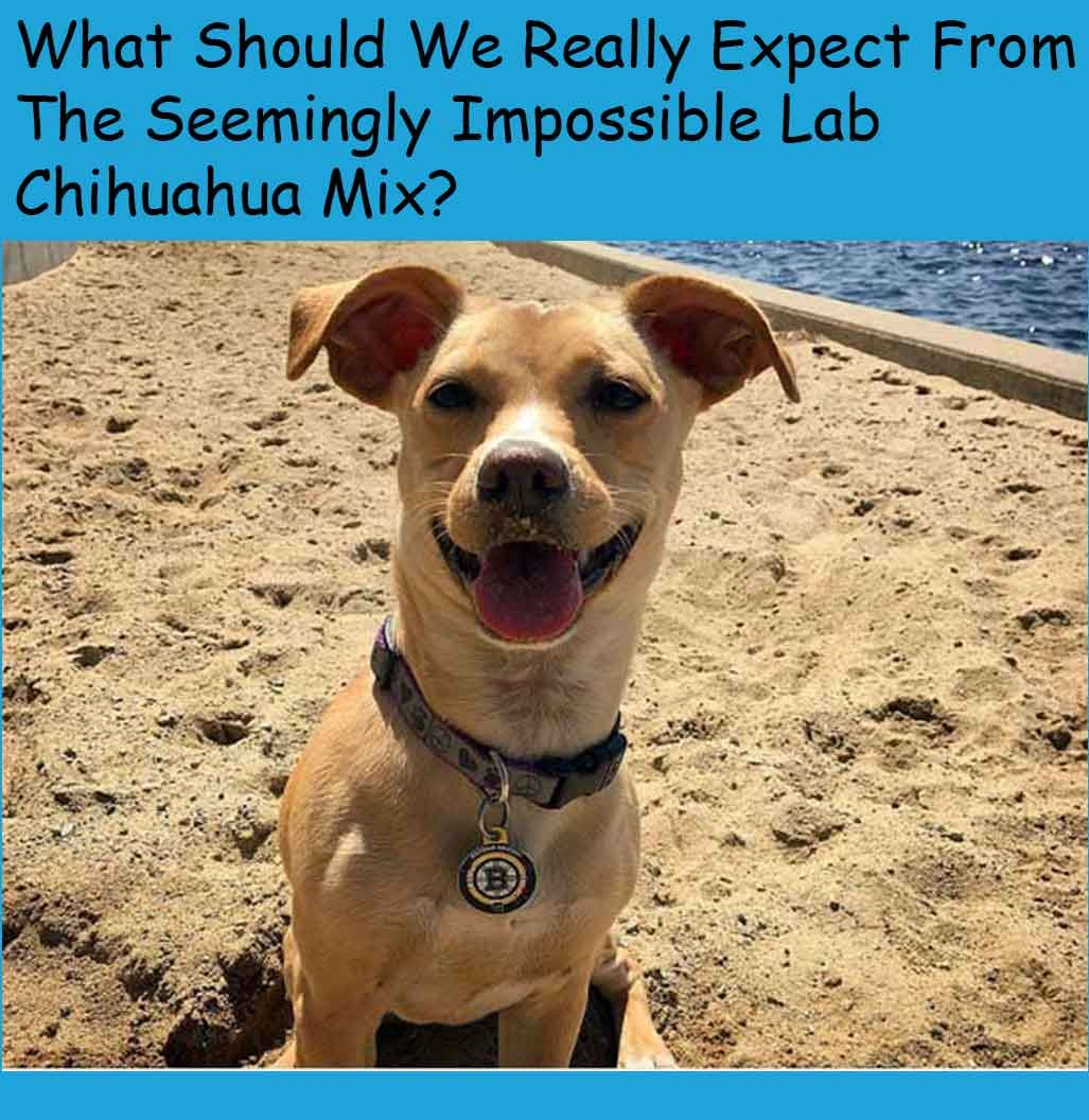 Pin By Hannah Bond On New Friend Cute Little Puppies Chihuahua Mix Little Puppies