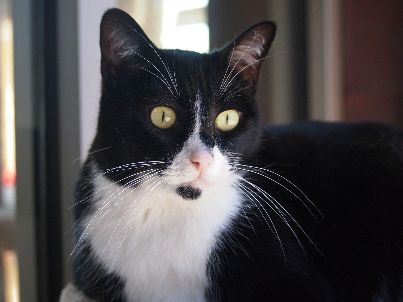 Inga Cat adoption, Cats, White cats