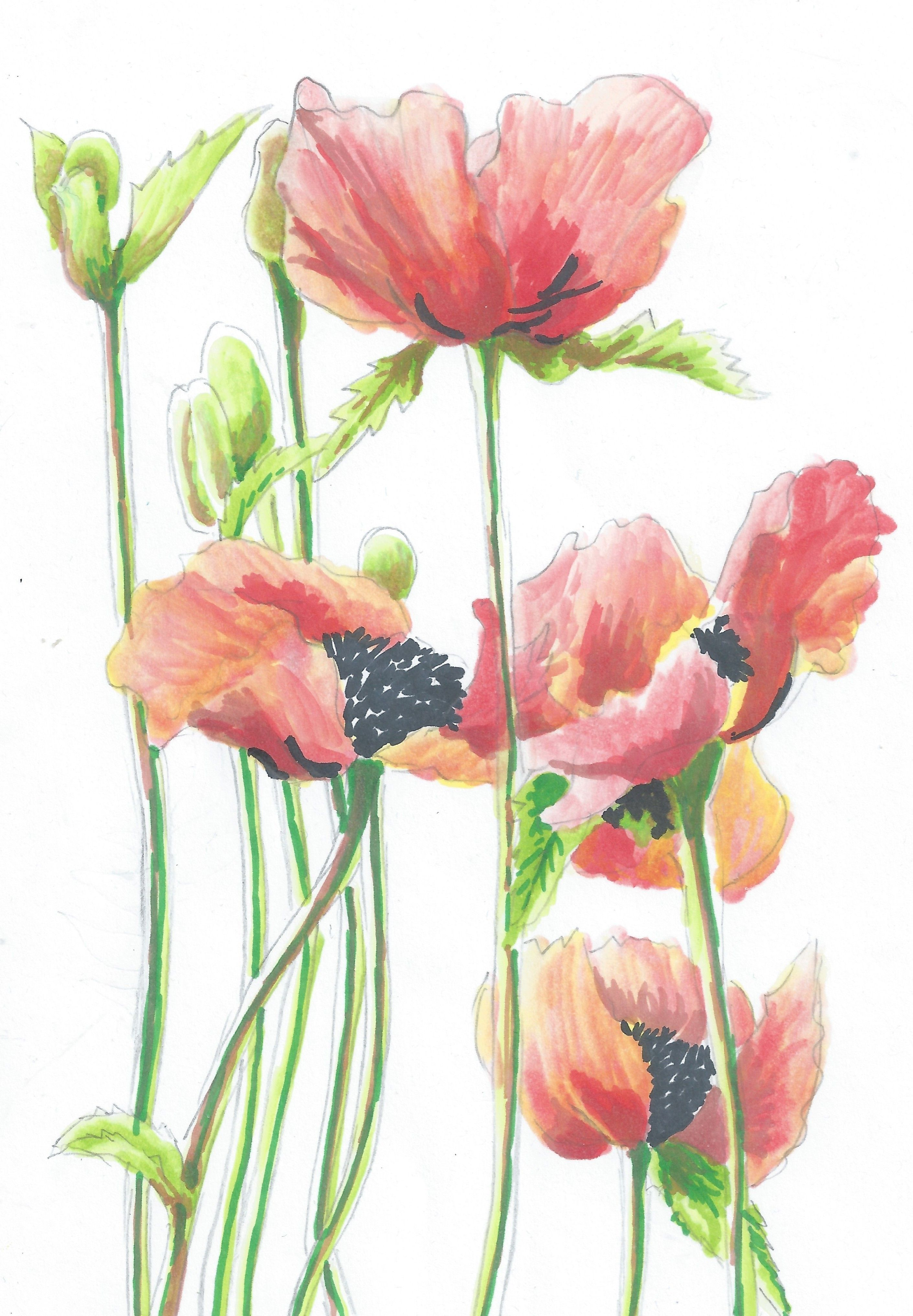 Poppy Ink Drawing Pinterest Draw Paintings And Flower Art