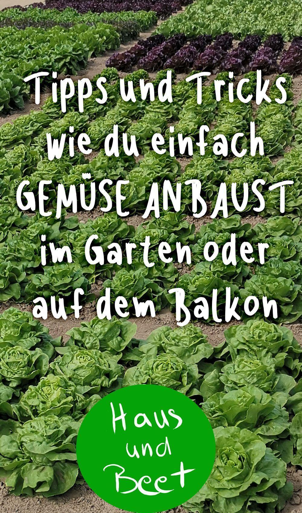 Anbau Von Gemuse Haus Und Bett Gemusegarten Pflanzen Anbau Von Gemuse Kalender Anbauvongemu Gemuse Anbauen Selbstversorger Garten Garten Ideen Gemuse