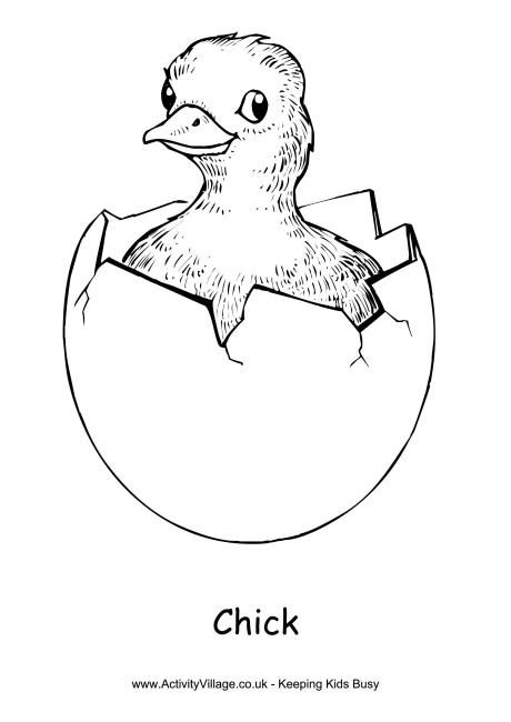 chick coloring page 2 - Chick Coloring Page 2