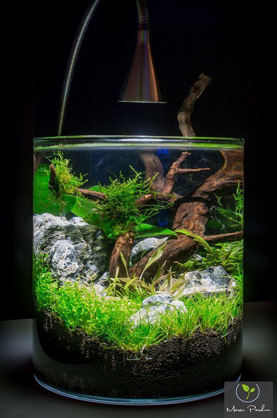 D corer un petit aquarium voici un peu d 39 inspi 20 for Petit aquarium
