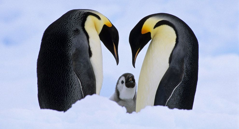 World Animal Day | Mothers, Penguins and Animals