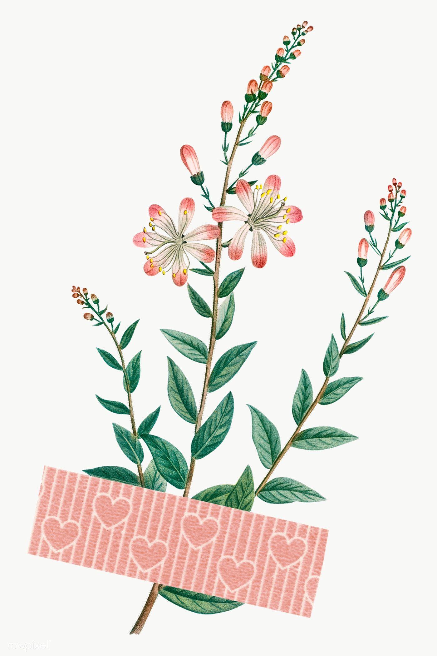 Flower With A Pink Washi Tape Design Element Transparent Png Premium Image By Rawpixel Com Ningzk V Flower Aesthetic Flower Drawing Flower Illustration