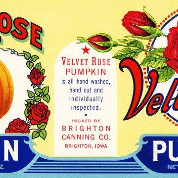 velvet rose pumpkin label, vintage pumpkin label, antique food label, free vintage pumpkin graphic, free printable label, pumpkin rose can label, public domain label