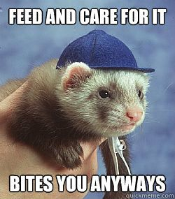 pin ferret meme on - photo #5