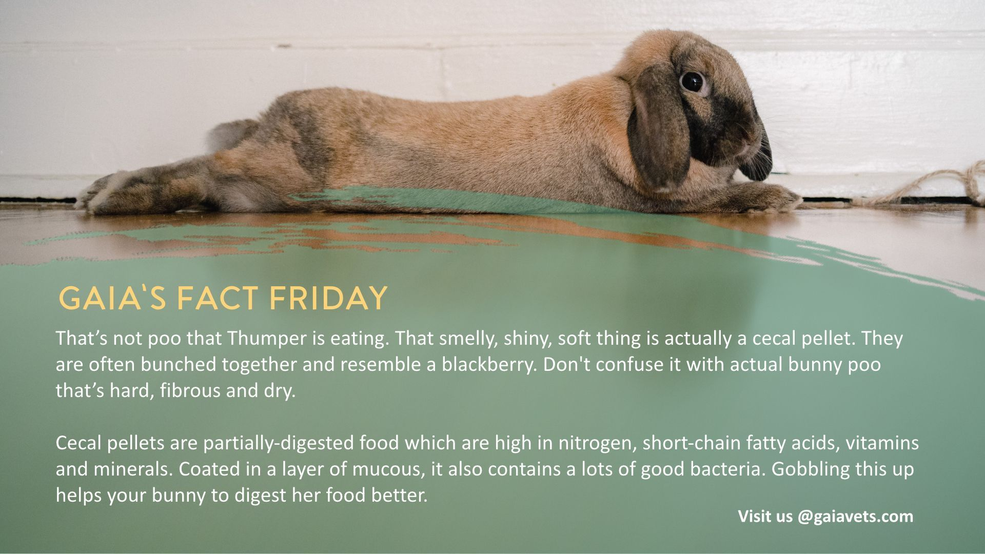 Here S A Bunny Fun Fact For The Easter Weekend That S Not