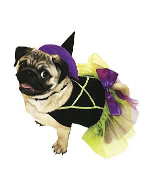 Asda Dog Outfit Pictures Google Search Dog Clothes Witch