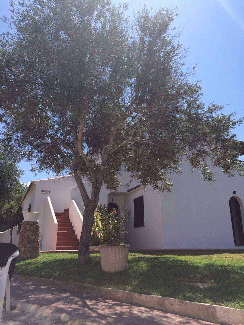 Talayots Apartments in Menorca | Menorca, Tree, Holiday 2016