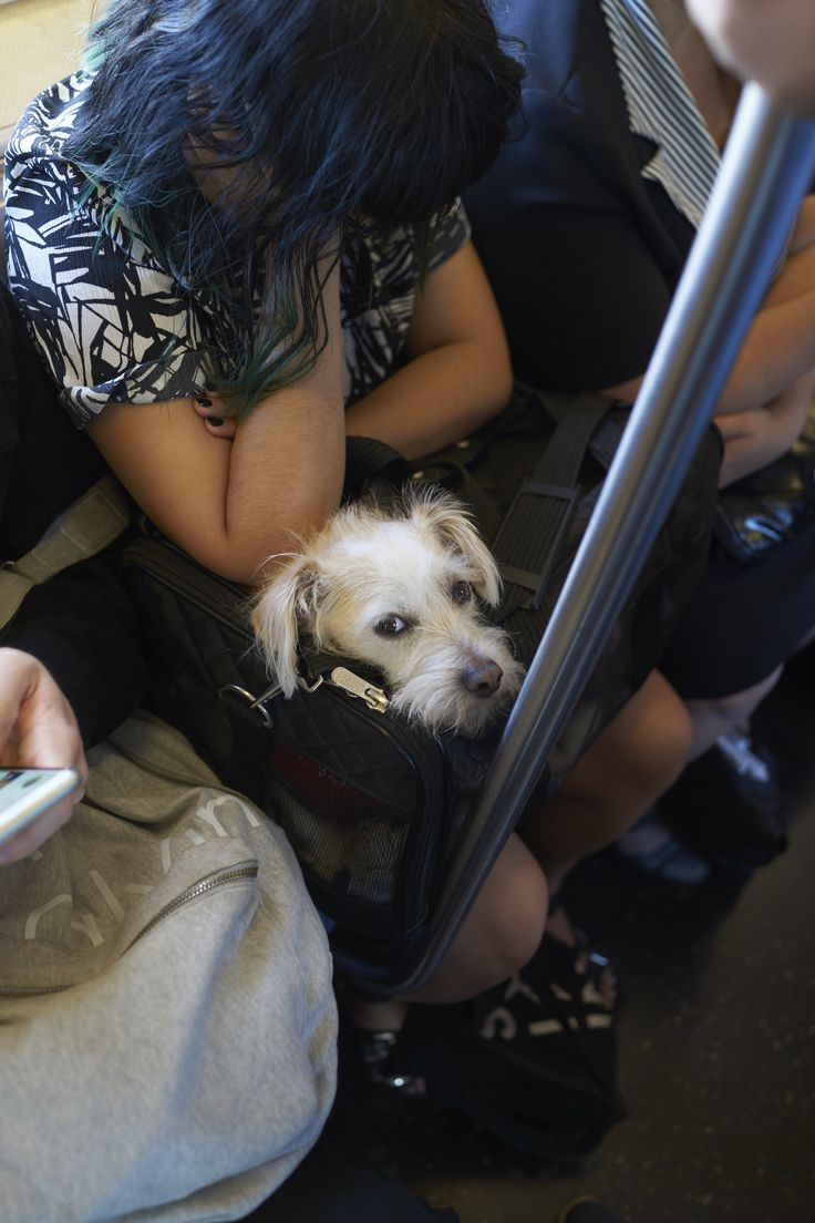 Public Transport Pet Policy New York City Pet travel