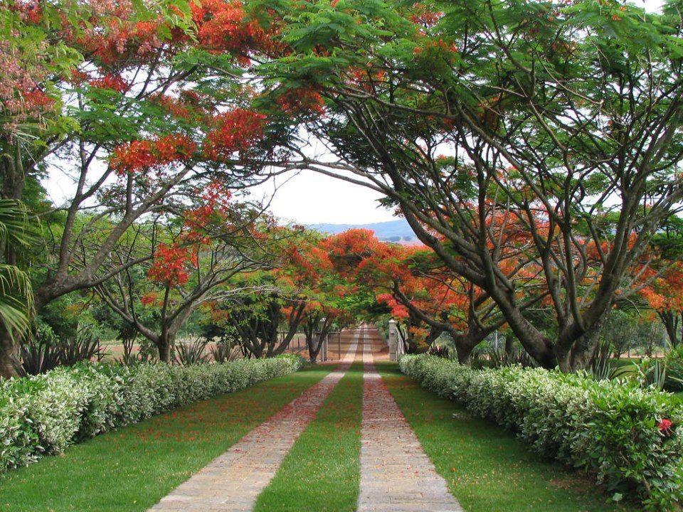 DESIGN -Tropical Gardens