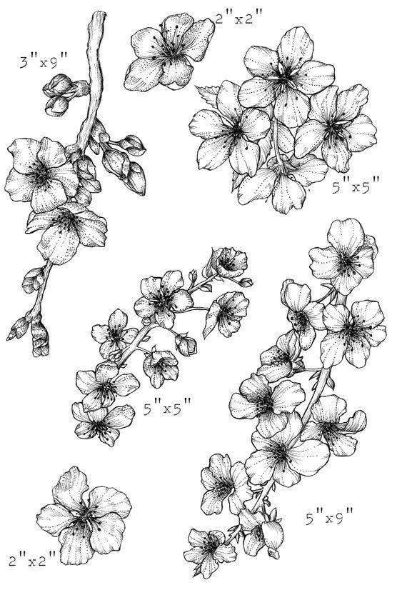 Cherry Blossom Clip Art Cherry Blossom Png Sakura Png Hand Etsy In 2021 Cherry Blossom Clip Art Cherry Blossom Drawing Cherry Blossom Tattoo Shoulder
