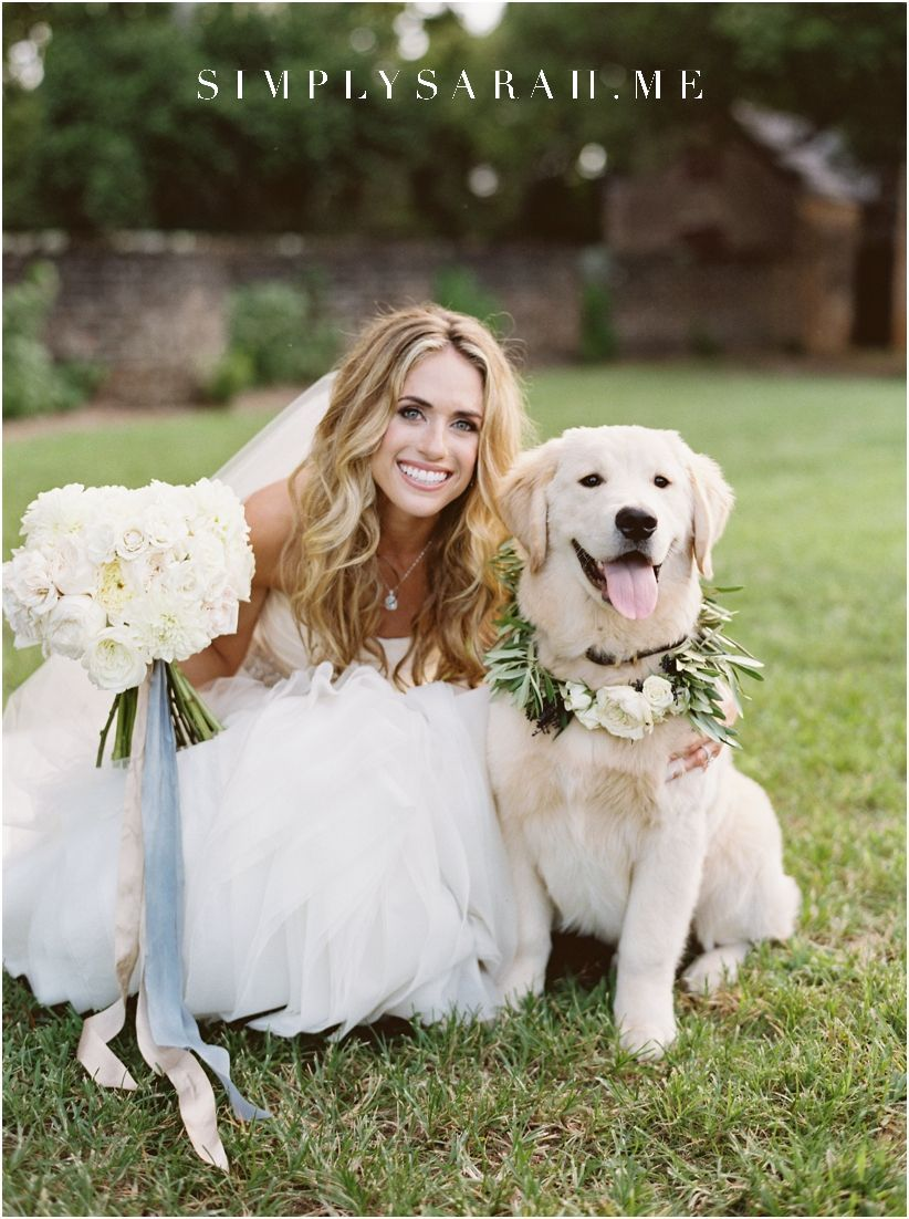 Dogs In Weddings Are The Best This Golden Retriever Ring Bearer