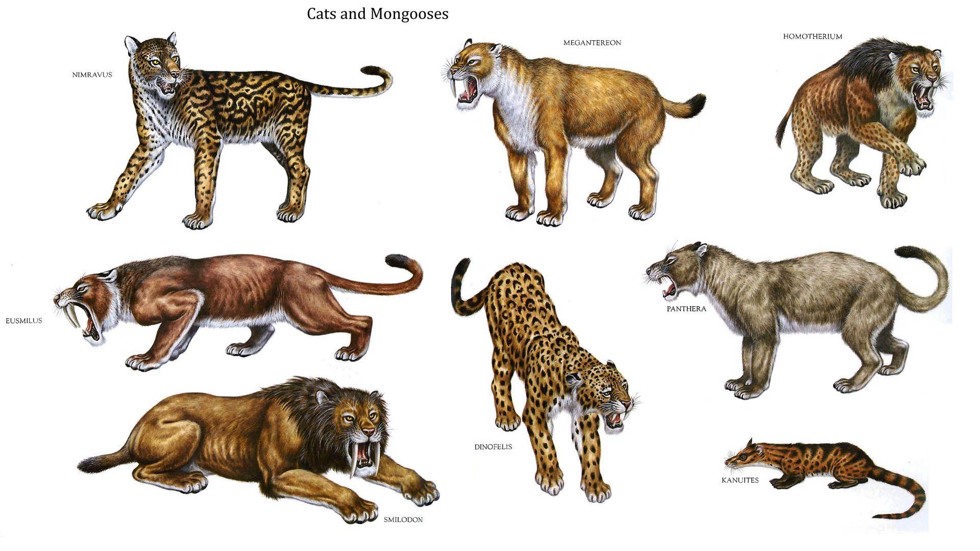 Oldest Wild Cat Species