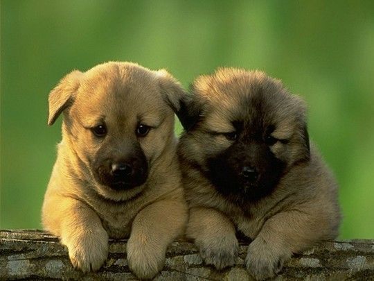 Two Cute Puppies Hang Out With Images Puppies Cute Dog
