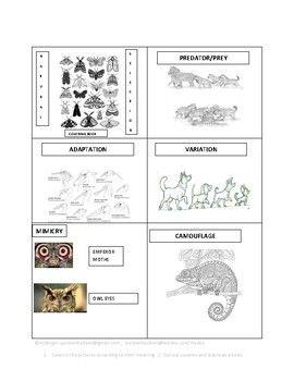 Natural Selection Coloring Book Lesson Plans Pinterest Lesson