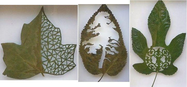 diseños artísticos tallados sobre hojas de arboles cajondesastreII