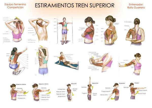 Miembro Superior Estiramientos Estiramientos Ejercicios De Fisioterapia Ejercicios Para Dolor De Espalda