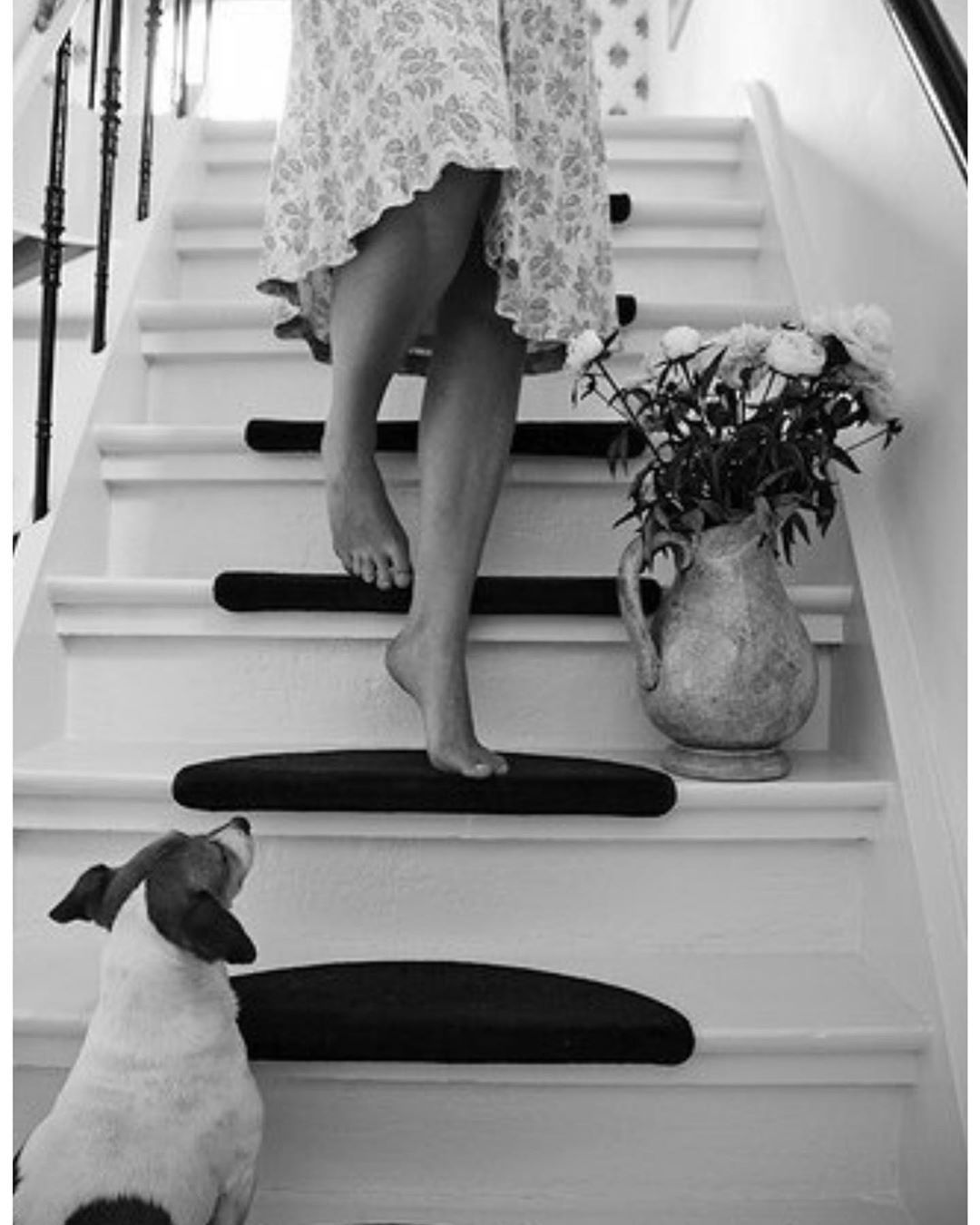 Pin by Live smarter on Puppies Black and white
