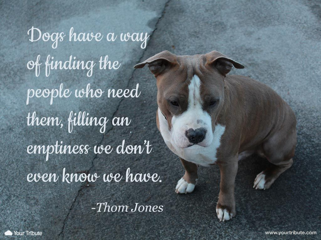 Dog Quotes: Thom Jones: Dogs Have A Way Of Finding The People