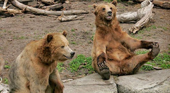 Pin By Najee Carrasco On Guests To Sf Ideas San Francisco Zoo Zoo Animal Pictures