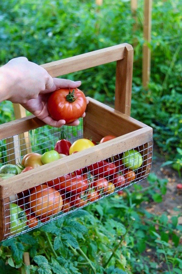 The Best Organic Fertilizer And Plant Food Options For 400 x 300