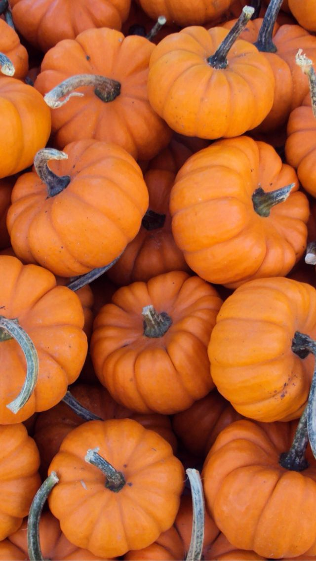 iphone wallpaper in 2019 Pumpkin wallpaper, Fall