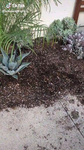 50 Beautiful Succulent Garden Ideas  varieties  succulent  garden  indoor  outdoor