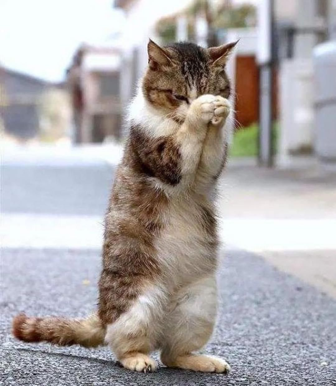 Pin by CHARMAINE on CatsStandingUp Cute animals, Cats