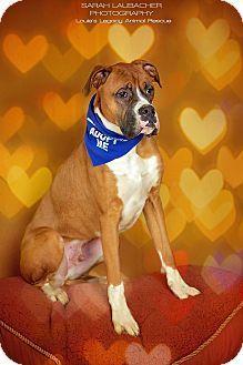 Adopted💙Foreman Cincinnati, OH Dog adoption, Boxer mix