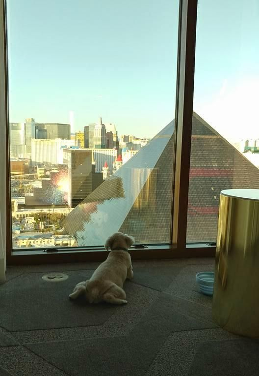 Tips For Planning A Dog Friendly Las Vegas Vacation Las Vegas Vacation Vegas Vacation Las Vegas Hotels