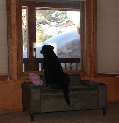 Custom Dog Beds Amp Furniture Abby Enjoys Her New Window