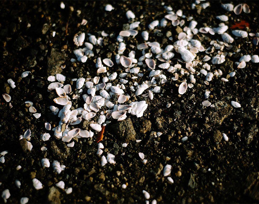 Shell Gravel | Kate Donaldson