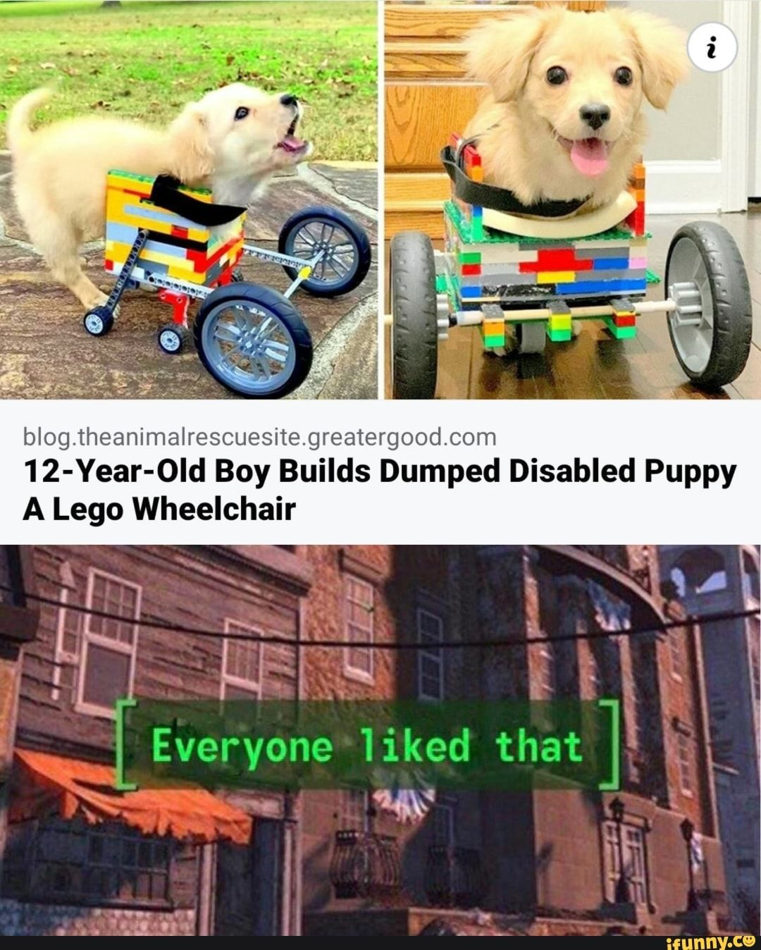Blog Theanimalrescuesite Greatergood Com 12 Year Old Boy Builds Dumped Disabled Puppy A Lego Wheelchair Ifunny 12 Year Old Boy 12 Year Old Old Boys