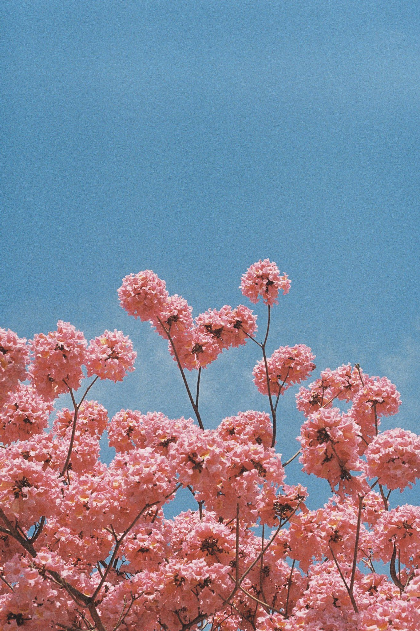 Brandon Woelfel On Twitter Pink Flowers Wallpaper Flower Iphone Wallpaper Flower Phone Wallpaper Fantastic pastel flower wallpaper