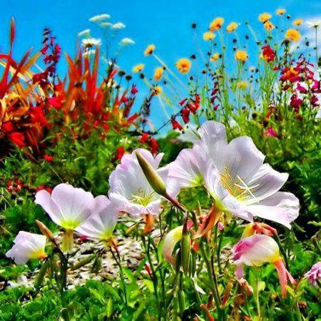 flores preciosas imagenes bonitas - Fotos De Flores Preciosas