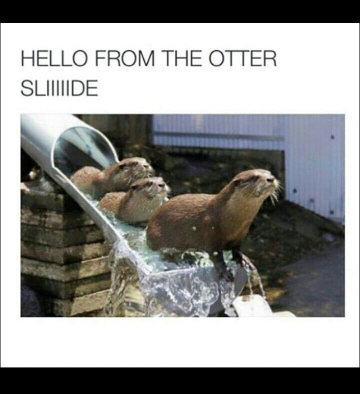 Hello from the otter slide
