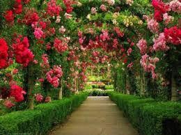 Flowers Gardens Wallpapers For Desktop Full Size Google Search