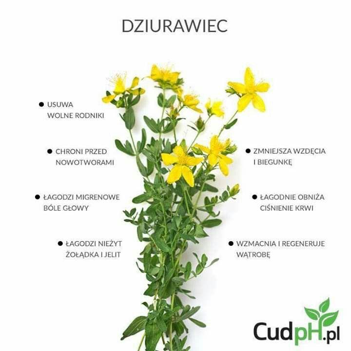 Pin By Posluga On Ciekawostki Herbs Health Eating Food